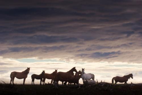Pensions pour chevaux équestre, Caen, Vire, Flers